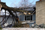 The Claim Guide helps you with your tree fall damage claim